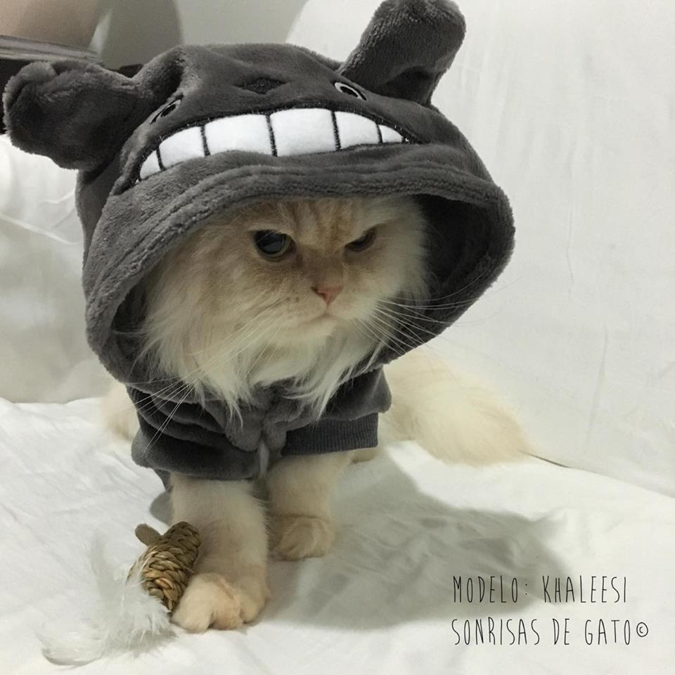 Disfraz totoro para gatos tienda sonrisas de gato - Disfraces de gatos para ninos ...