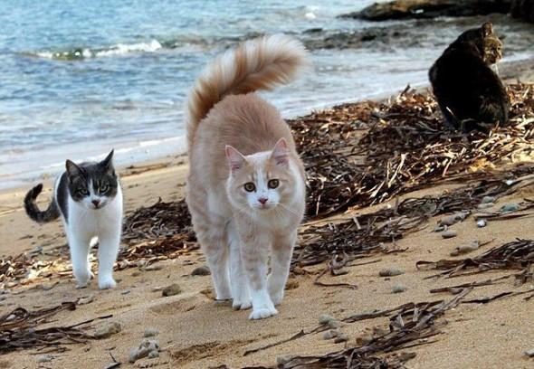 Una playa en donde los Gatos son los Reyes
