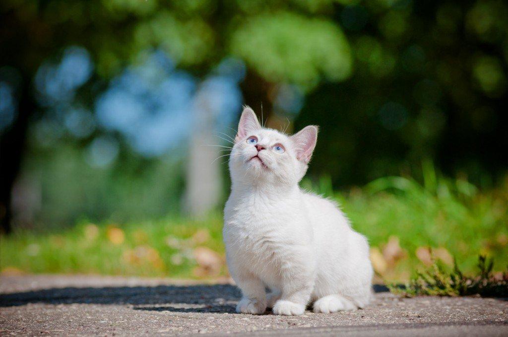 12 Tips para llevarse bien con tu gato