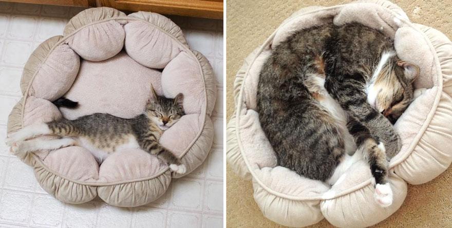 12 Fotos gatunas del antes y después